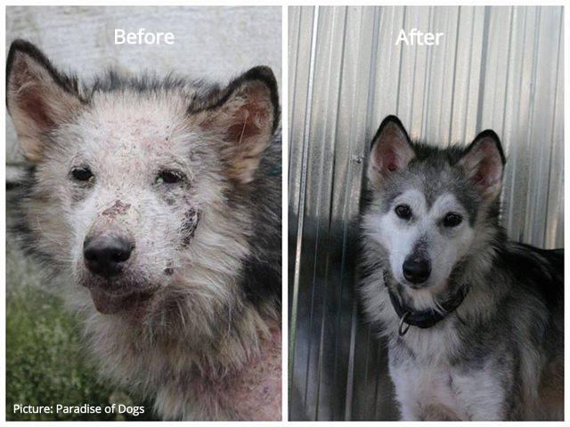chien avant après deux photos