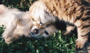 cbd for pets like dogs and cats