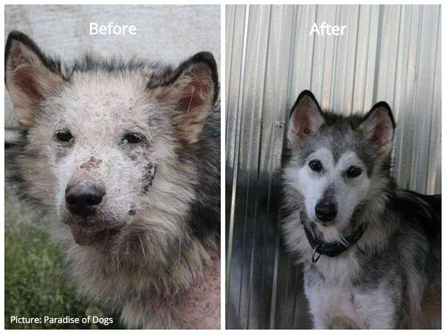 dog before after